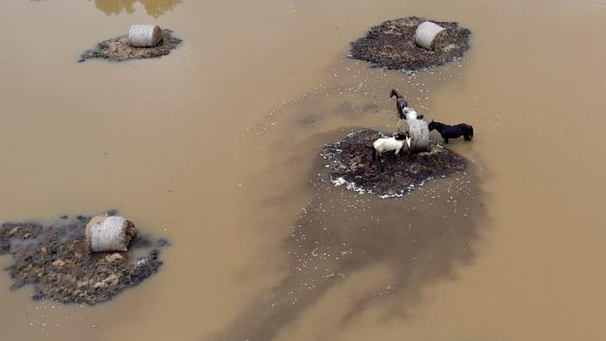 Horses surrounded by floodwaters are shown in this aerial view Saturday, June 4, 2016, in Rosharon, Texas. Parts of Texas have been inundated with rain in the last week, and more than half of the state has been under flood watches or warnings. (AP Photo/David J. Phillip)