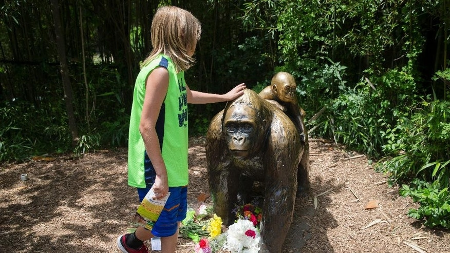 FILE - In this Sunday, May 29, 2016 file photo, a child touches the head of a gorilla statue where flowers have been placed outside the Gorilla World exhibit at the Cincinnati Zoo & Botanical Garden, in Cincinnati, where a western lowland gorilla was fatally shot Saturday, May 28, 2016, to protect a 3-year-old boy who had entered its exhibit. In some parts of Africa, tourists and researchers routinely trek into the undergrowth to see gorillas in their natural habitat where there are no barriers or enclosures. (AP Photo/John Minchillo, File)