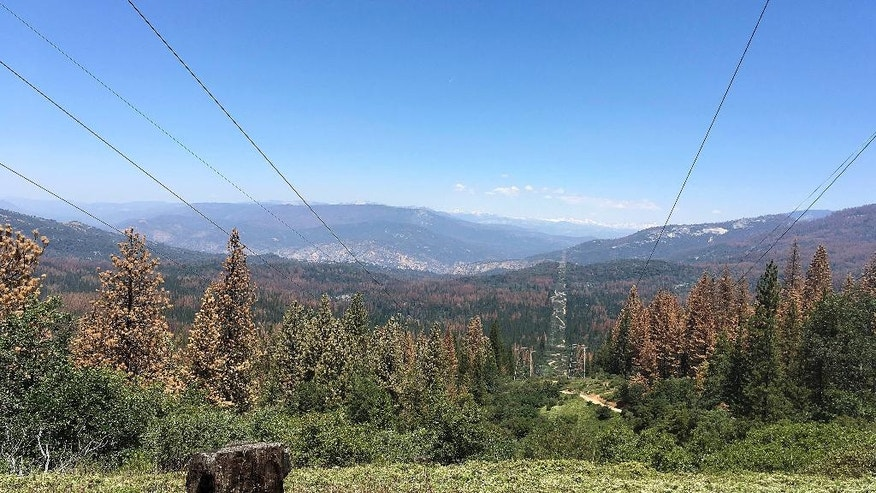 This June 6, 2016 photo shows patches of dead and dying trees near Cressman, Calif. California's drought and a bark beetle epidemic have caused the largest die-off of Sierra Nevada forests in modern history, raising fears that trees could come crashing down on people or fuel catastrophic wildfires, devastating mountain communities and choking the sky with smoke. Officials in California say they're preparing to use large air-blasting incinerators to burn up trees killed by drought and a beetle epidemic ravaging Sierra Nevada forests.  (AP Photo/Scott Smith)