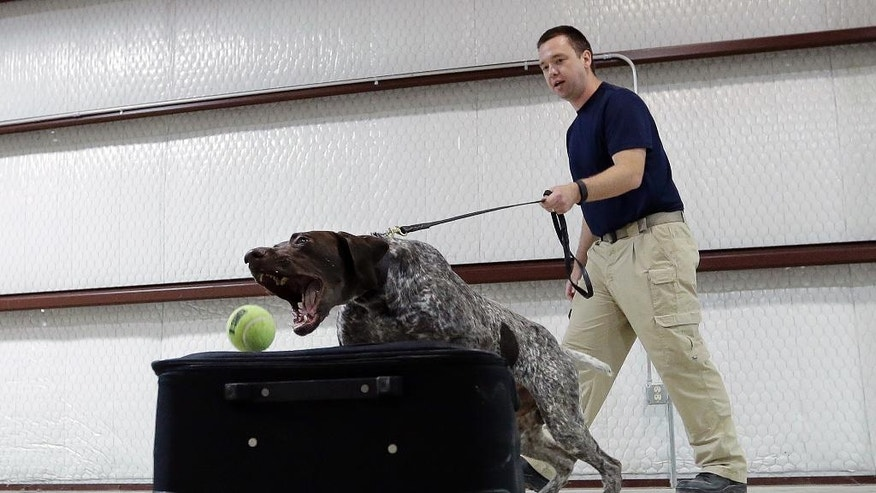 In this Thursday, June 9, 2016, photo, Transportation Security Administration dog trainer Mitchell Brown works with Atilla, a bomb-sniffing dog, in a makeshift luggage area at Lackland Air Force Base training facility in Texas. Short-staffed and often criticized, the TSA aims to improve training for airport screeners. (AP Photo/Eric Gay)
