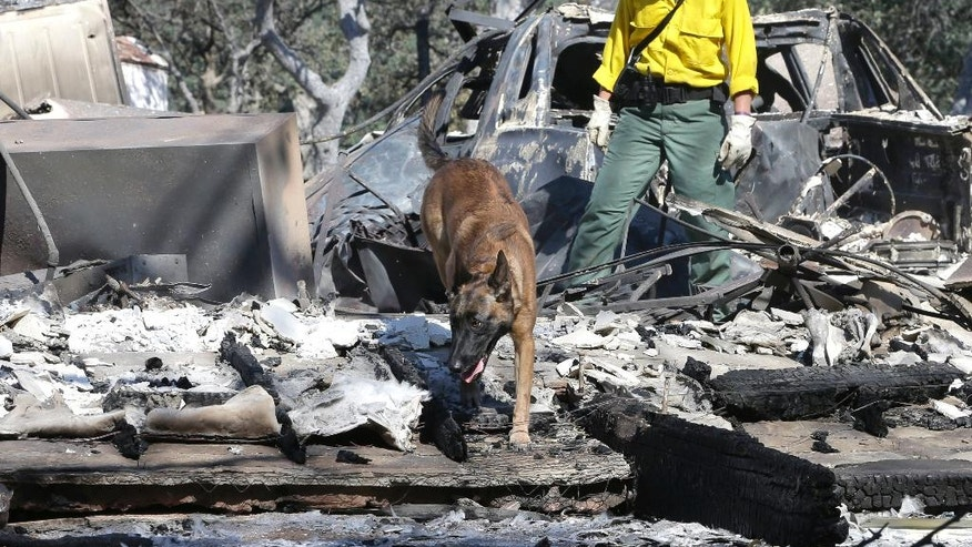 Inca, a cadaver dog, and her handler Mary Cablk search the burned ruins of a home Monday, June 27, 2016, in Squirrel Valley, Calif. The blaze had killed an elderly couple who were found Friday after apparently being overcome by smoke. The fire has burned more than 70 square miles and is 40 percent contained. (AP Photo/Rich Pedroncelli)
