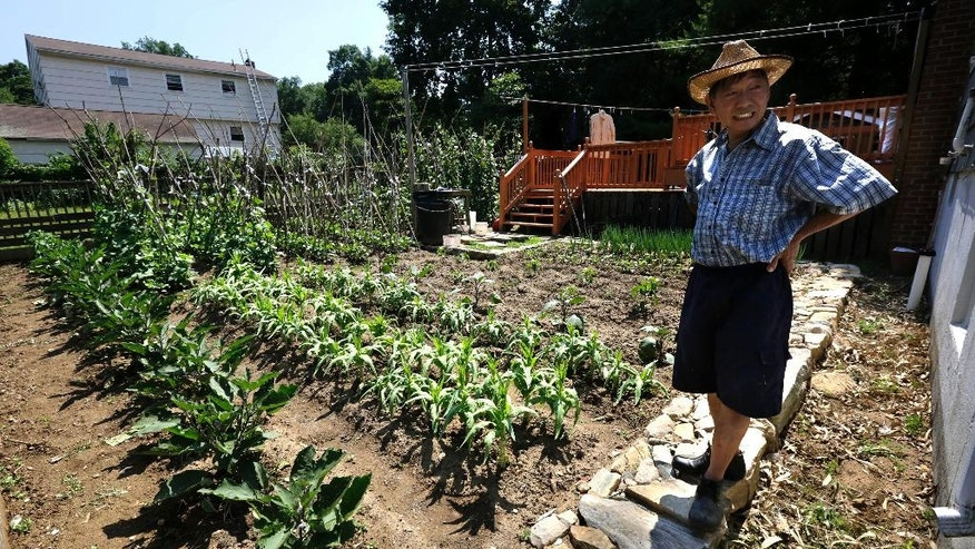 In this Wednesday, July 6, 2016 photo, Xu Song Mu, a 62-year-old former Mohegan Sun worker who came from Queens, New York with his family about eight years ago, stands in his vegetable garden planted next to his home in Uncasville, Conn. A Chinese immigrant community has been growing around the Mohegan Sun and Foxwoods casinos for more than a decade. Many have been drawn by the prospect of good paying casino jobs and a quiet suburban life. (AP Photo/Steven Senne)