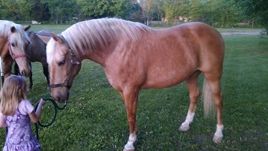 Therapy horse Cooper slipped out of his pasture in Missouri on July 11. (Mark Lenz)