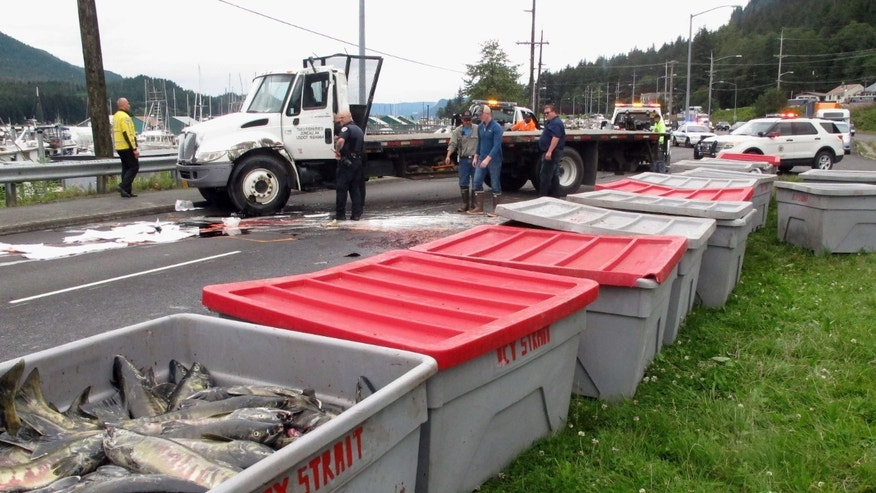 Fish bins dott the median along a busy highway as authorities worked to clean up after a transport truck carrying chum salmon rolled on Monday, July 25, 2016, in Juneau, Alaska.