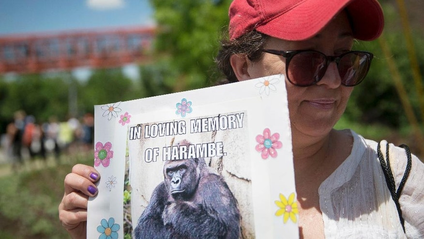 FILE - In this May 30, 2016 file photo, Alesia Buttrey, of Cincinnati, holds a sign with a picture of the gorilla Harambe during a vigil in his honor outside the Cincinnati Zoo & Botanical Garden, in Cincinnati. Harambe, the Ohio zoo gorilla shot and killed after a 3-year-old boy got into his enclosure, has taken on life after death. The late 17-year-old great ape has shown up in tongue-in-cheek petitions to rename the hometown Cincinnati Bengals, to add his face to Mount Rushmore or the Lincoln Memorial, and to put him on the dollar bill. He has grown the angel wings and halo of a deity in social media memorials. (AP Photo/John Minchillo, File)