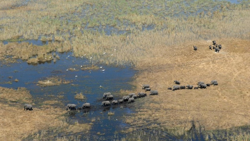 In this July 2014 photo provided by Vulcan Inc., scientists with Great Elephant Census fly over Botswana, Africa during a survey of savanna elephants on the continent. The number of savanna elephants in Africa is rapidly declining and the animals are in danger of being wiped out as international and domestic ivory trades continue to drive poaching across the continent, according to a study released Wednesday, Aug. 31, 2016. (Great Elephant Census, Vulcan Inc. via AP)