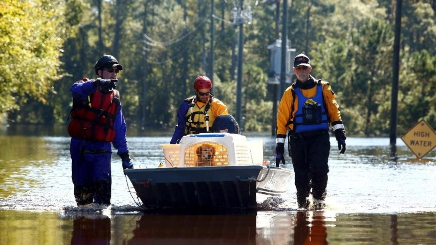A team from the ASPCA works to bring a dog named Caroline to dry land after rescuing the animal from a nearby home surrounded by floodwater associated with Hurricane Matthew on Thursday, Oct. 13, 2016, in Lumberton, N.C.  The society said it has helped nearly 1,000 animals in the Carolinas and Georgia since Hurricane Matthew struck last weekend.   (AP Photo/Brian Blanco)