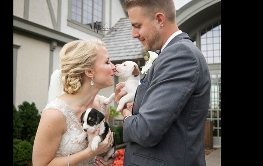 wedding puppies 1019B