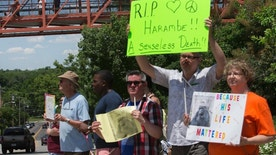 FILE - In This May 30, 2016 file photo, zoo visitors look at protestors and mourners from a walk bridge during a vigil for the gorilla Harambe outside the Cincinnati Zoo & Botanical Garden, in Cincinnati. The Cincinnati Zoo has rejoined Twitter after a two-month hiatus that was sparked by outrage over the May shooting death of Harambe, the zoo's 17-year-old gorilla. The Cincinnati Enquirer reports the zoo deactivated its account on the popular social media platform on Aug. 21 and resumed tweeting @CincinnatiZoo on Tuesday, Oct. 18, 2016.. (AP Photo/John Minchillo, File)