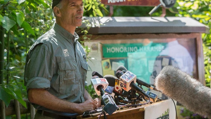 FILE – In this June 7, 2016, file photo, Zoo Director Thane Maynard speaks during a news conference at the Gorilla World exhibit at the Cincinnati Zoo & Botanical Garden in Cincinnati. Maynard said Monday, Oct. 24, 2016, that attendance wasn't significantly affected after a 17-year-old gorilla named Harambe was shot and killed May 28, 2016, when a 3-year-old boy fell into the gorilla's enclosure. (AP Photo/John Minchillo, File)