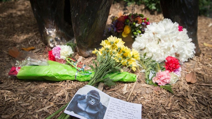 FILE – In this May 29, 2016, file photo, a sympathy card rests at the feet of a gorilla statue outside the Gorilla World exhibit at the Cincinnati Zoo & Botanical Garden in Cincinnati. The director of the Cincinnati Zoo & Botanical Garden, Thane Maynard, said Monday, Oct. 24, 2016, that attendance wasn't significantly affected after a 17-year-old gorilla named Harambe was shot and killed May 28, 2016, when a 3-year-old boy fell into the gorilla's enclosure. (AP Photo/John Minchillo, File)