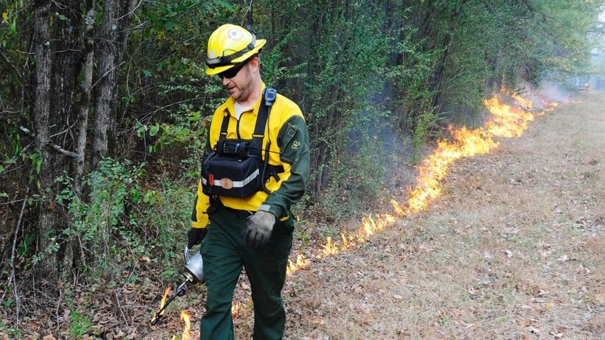 Brad Lang, a firefighter with the Alabama Forestry Commission, sets a backfire to help extinguish a wildfire near Brookside, Ala., on Thursday, Oct. 27, 2016. Wildfires have burned hundreds of acres a day in the South as a drought worsens across much of the region. (AP Photo/Jay Reeves)