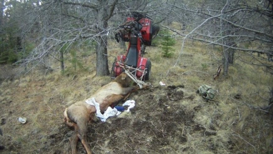 A hunter was impaled by an elk had had just killed after his ATV crashed this weekend, sending him  backward into the animal's antlers.