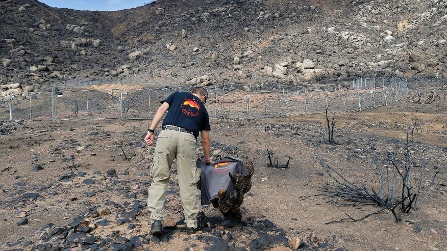 FILE -In this July 23, 2013 file photo, Prescott Wildland Division Chief Darrell Willis touches A Granite Mountain Hot Shots crew shirt draped over a burned cactus, in Yarnell, Ariz. Arizona Gov. Doug Ducey plans to dedicate a long-awaited memorial for the 19 Granite Mountain Hotshots who perished in a wildfire three years ago. Ducey will be joined by family members of the fallen firefighters on Tuesday, Nov. 29, 2016, at a private dedication of the Granite Mountain Hotshots Memorial State Park. (AP Photo/Matt York, File)