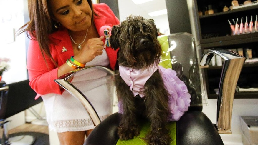 Jessica Silva pets her brothers dog, Juicy at in the re-opening of the D'Magazine Salon Thursday, Dec. 8, 2016, in Orlando, Fla. Silva's brother Juan Rivera Velazquez, the original owner of the salon and partner Luis Daniel Conde, were both killed in the Pulse nightclub shooting. (AP Photo/John Raoux)