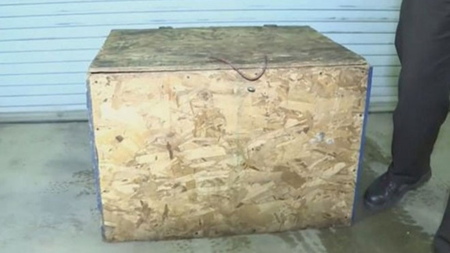 Girl, 3, forced to live in wooden box covered in dead bugs