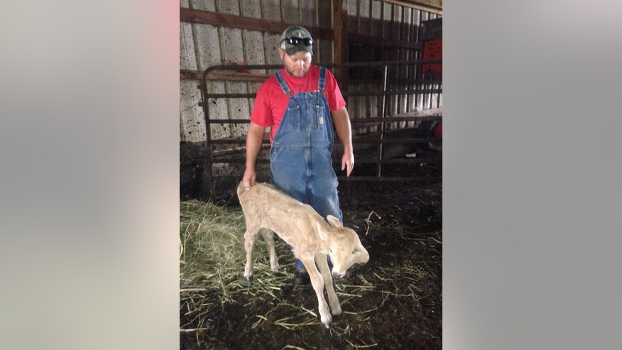 In a photo provided by Brandy McCubbin, Stan McCubbin stands with a two-faced calf named Lucky in Taylor County, Ky., date not known. Lucky died Monday, Jan. 2, 2017. The Lexington Herald-Leader reports the McCubbin family had been trying to raise $500 for a scan to see if the calf's cleft palate could be repaired, which would allow her to eat hay. Donors gave thousands of dollars, and Brandy McCubbin said the family is looking for a charitable cause for the money. McCubbin said the calf was 108 days old when she died. The animal had four eyes, two noses and two mouths. (Brandy McCubbin via AP)