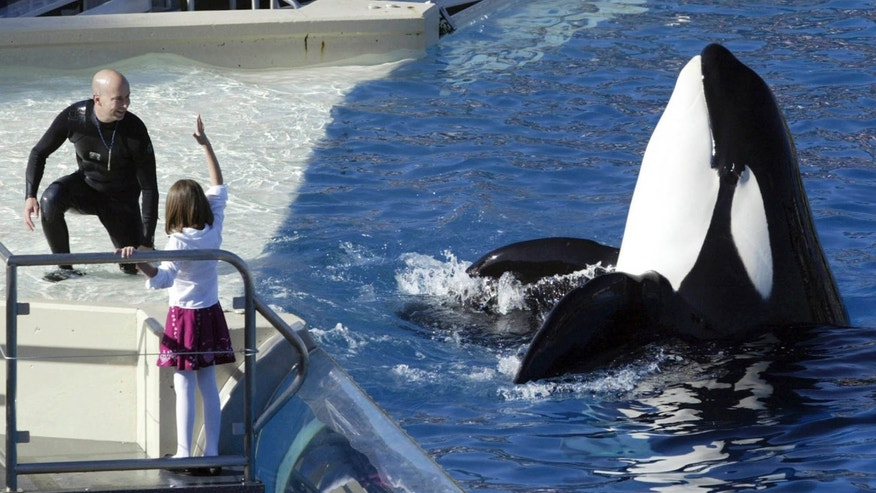 SeaWorld San Diego ending killer whale show | Fox News