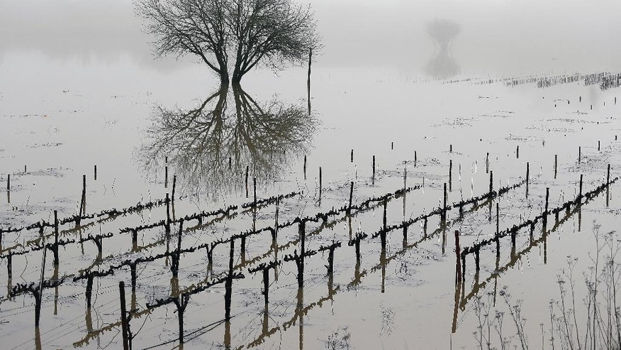 Vineyards remain flooded in the Russian River Valley, Monday, Jan. 9, 2017, in Forestville, Calif. A massive storm system stretching from California into Nevada lifted rivers climbing out of their banks, flooded vineyards and forced people to evacuate after warnings that hillsides parched by wildfires could give way to mudslides. (AP Photo/Eric Risberg)