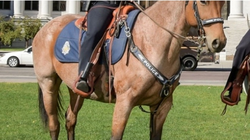 Police Horse Dies After Officer Forgets Him