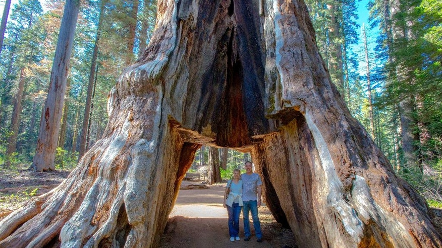 "In this May 2015 photo provided by Michael Brown, John and Lesley Ripper pose in the Pioneer Cabin tunnel tree, a giant, centuries-old sequoia that had a tunnel carved into it in the 1880s, during a visit to Calaveras Big Trees State Park near Arnold, Calif., in the Sierra Nevada. The tree came crashing down on Sunday, Jan. 8, 2017, during a massive storm. ""I was blown away,"" said John Ripper, a 55-year-old printer in Northville, Michigan. ""I've traveled to 70 countries, But that particular tree and being able to walk underneath it and touch it was quite a memorable moment and something I won't soon forget."" (Michael Brown via AP)"