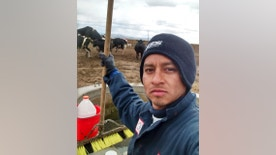 This 2015 self-portrait by César Nerón Martínez Rodríguez shows him at work at the Funk Dairy in Murtaugh, Idaho. He is one of six veterinarians who say they were recruited from Mexico to work at the Idaho dairy farm as animal scientists, but were instead forced to work as laborers, milking cows and shoveling manure for about a year. On Tuesday, Jan. 3, 2017, they filed a federal human trafficking lawsuit against the dairy's owners and the lawyer who arranged work visas. (César Nerón Martínez Rodríguez via AP)