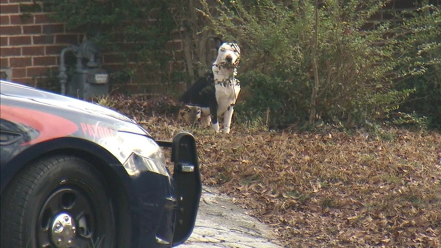 Police said one child was killed and two others were injured in an attack involving three dogs Tuesday morning in Southwest Atlanta.