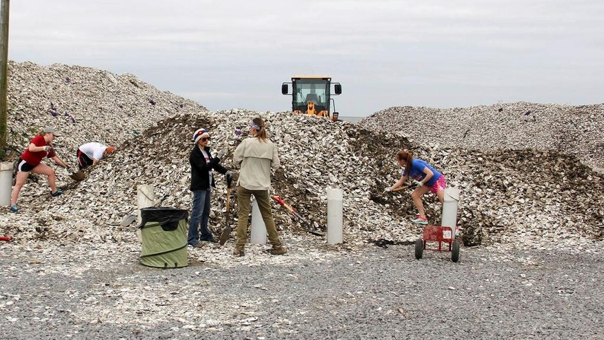 This Nov. 17, 2016 photo provided by the Coalition To Restore Coastal Louisiana shows large piles of shell being stored in Buras, La., which were collected for an oyster shell recycling program. The program spearheaded by two environmental groups in coordination with area restaurants aims to take a waste product that used to fill landfills and instead make it into a structure that tiny oyster larvae can latch onto and grow. The structures in turn can slow erosion and storm surge that is swiftly eating into Louisiana's coast as well as provide other environmental benefits. (Sarah Pate/Coalition To Restore Coastal Louisiana via AP)