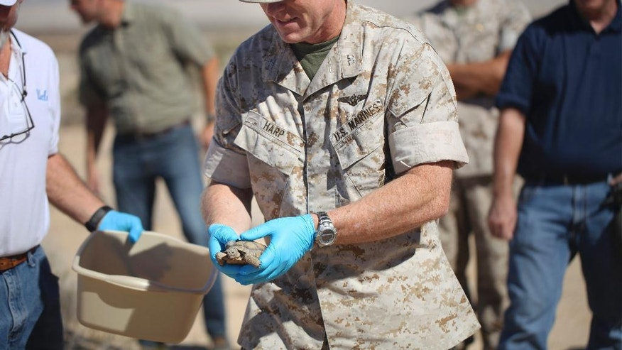 FILE - In this Sept., 30, 2015 file photo released by the U.S. Marines Corps, Combat Center Chief of Staff, Col. James F. Harp releases a tortoise during the Natural Resources and Environmental Affairs-hosted ceremony for the first release of tortoises from the Combat Center's Desert Tortoise Headstart Program, near Twentynine Palms, Cailf. Federal authorities have approved a plan to move nearly 1,500 desert tortoises from a Southern California Marine base. The removal could begin at the end of March or in April 2017, after the reptiles emerge from their underground winter hibernation.  (Lauren Kurkimilis/U.S. Marines Corps via AP, File)