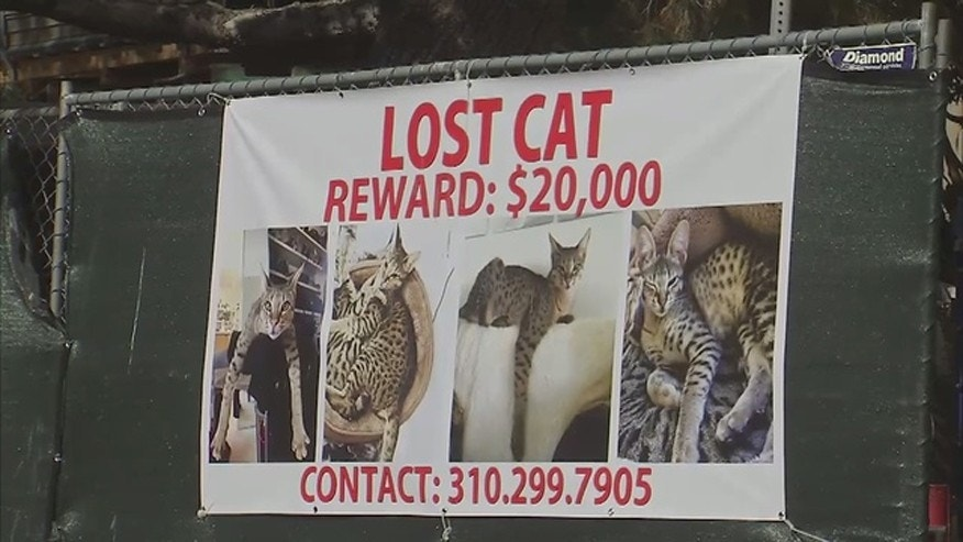 $20,000 Reward for a Cat