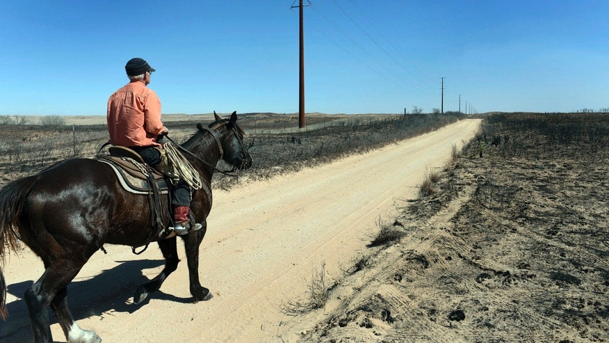 David Crockett, grandfather of the Cody Crockett who died in Monday's wildfires, rides the scorched prairie of Franklin Ranch searching for injured cattle Tuesday, March 7, 2017 after wildfires raced across Gray County, Texas driven by 50 mph winds.