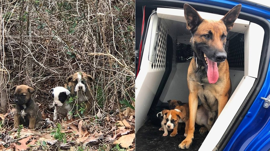 Three puppies dumped in an abandoned Atlanta subdivision were rescued by a state trooper and his K9 partner.