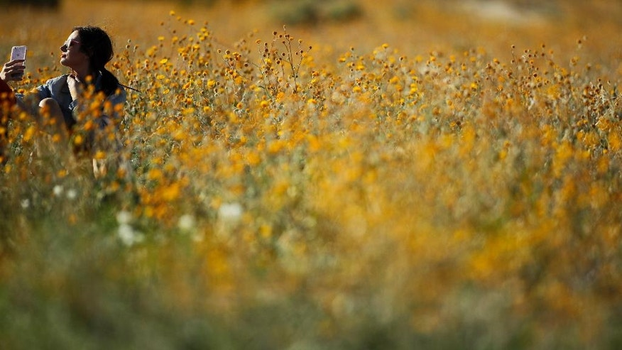 In this March 27, 2017, photo, a visitor takes a selfie among wildflowers in Borrego Springs, Calif. Rain-fed wildflowers have been sprouting from California's desert sands after lying dormant for years - producing a spectacular display that has been drawing record crowds and traffic jams in area desert towns. (AP Photo/Gregory Bull)