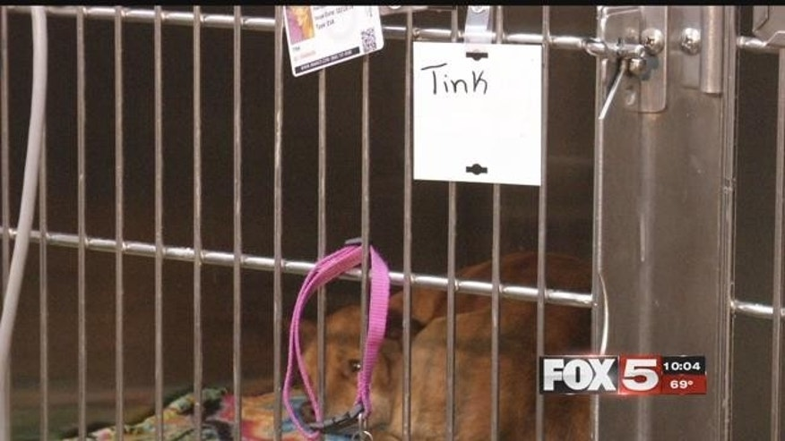 The dogs were hospitalized after suffering severe poisoning symptoms from eating the toxic meat left near Comstock Park in Nevada. (Fox 5 Las Vegas)