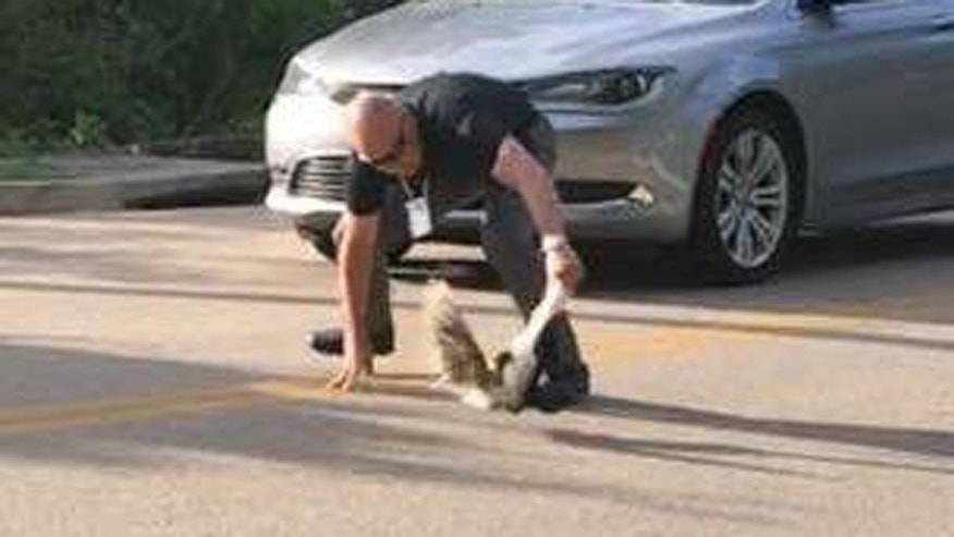 A deputy noticed a skunk wandering outside headquarters with a yogurt cup stuck on its head.