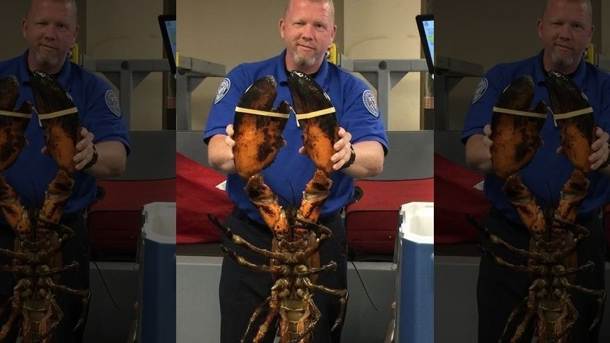 Giant lobster found in checked baggage at Boston airport