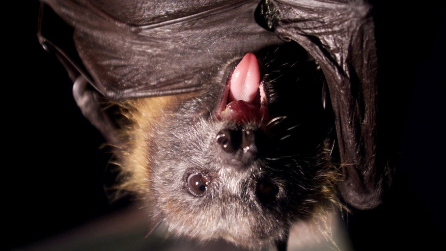 A man is wanted in a Connecticut town of after officials say he dropped off a bat with rabies at an animal hospital.