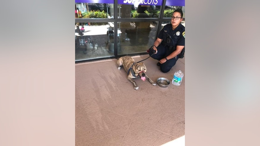 Police officers in Boynton, Fla., rescued a pit bull locked inside an unattended vehicle.