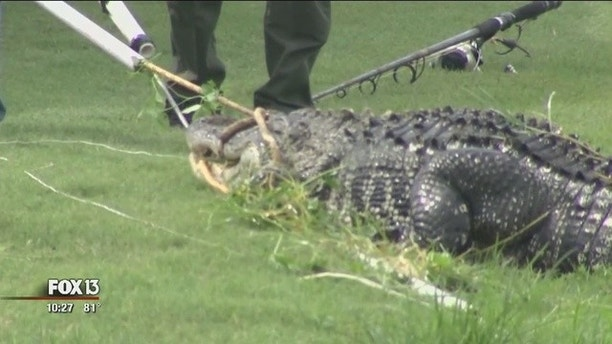 Former Jacksonville man bitten by gator at South Florida golf course