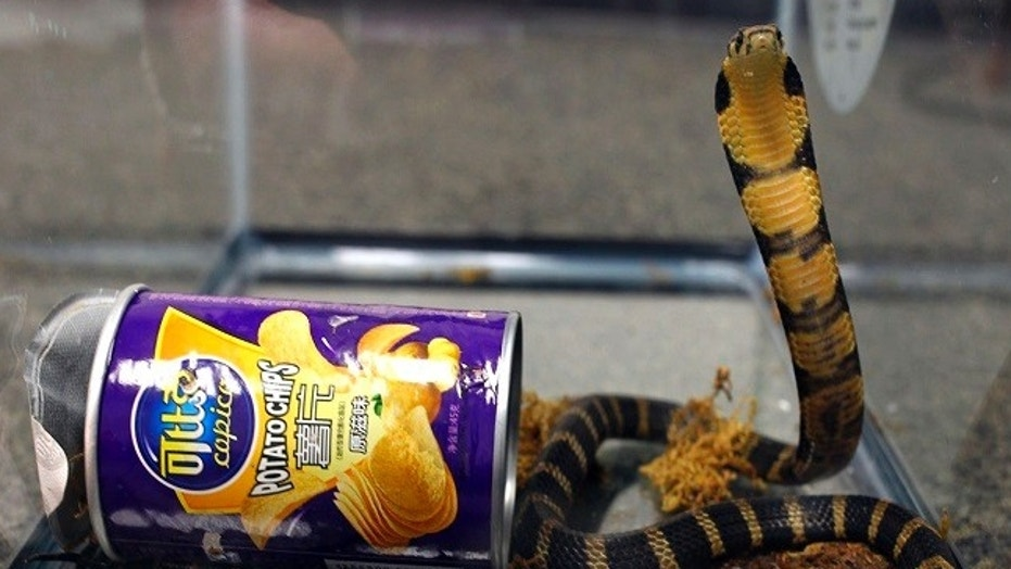A man was arrested and accused of smuggling three king cobras to his California home, prosecutors said.