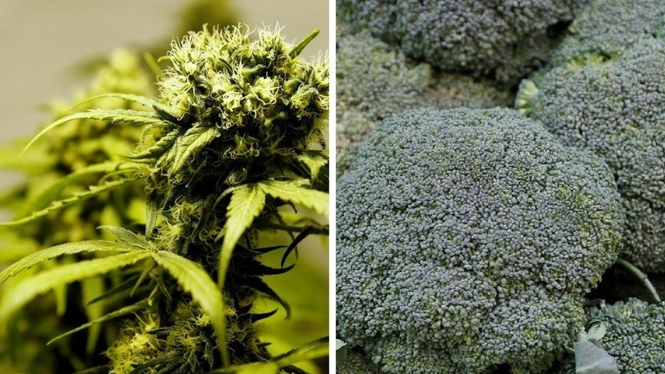 Two men in Colorado were tricked when they bought $10,000 worth of marijuana that was actually broccoli.