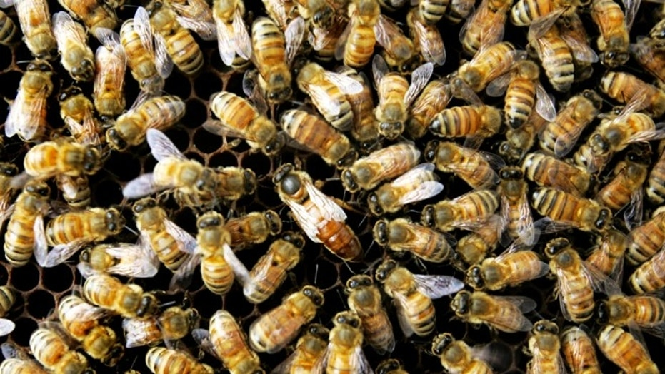 A swarm of bees attacked three people outside a home in Arizona, killing one person.