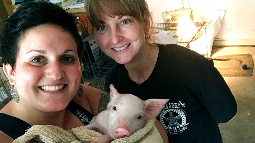 Francesca McAndrews, in a selfie with a piglet named Enzo and the animal's caretaker Lorrie Dunn.