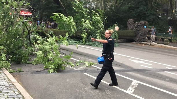 Falling tree in Central Park injures four people