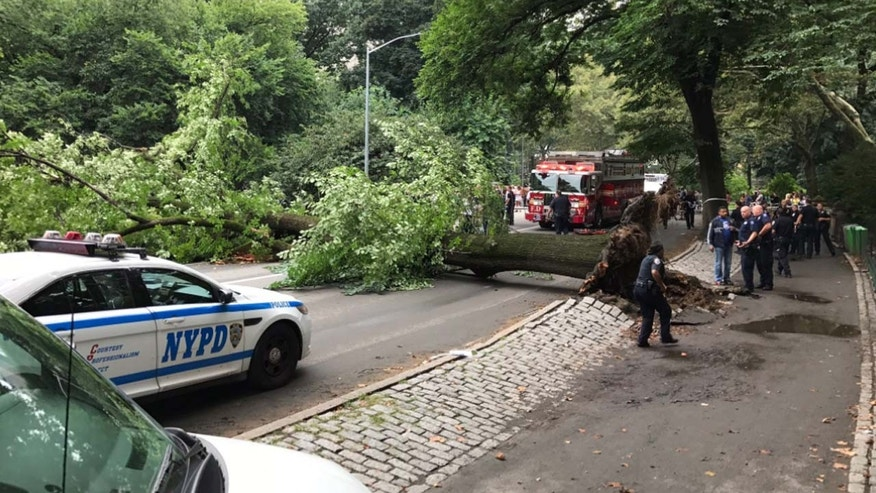A massive tree in Central Park crashed down on a mother and her three children.