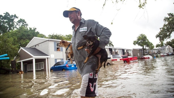 Felipe Grande removes his two dogs from his apartment at Bayou Parc at Oak Forest, Sunday, Aug. 27, 2017, in Houston. The remnants of Hurricane Harvey sent devastating floods pouring into Houston Sunday as rising water chased thousands of people to rooftops or higher ground.( Marie D. De Jesus / Houston Chronicle )/Houston Chronicle via AP)
