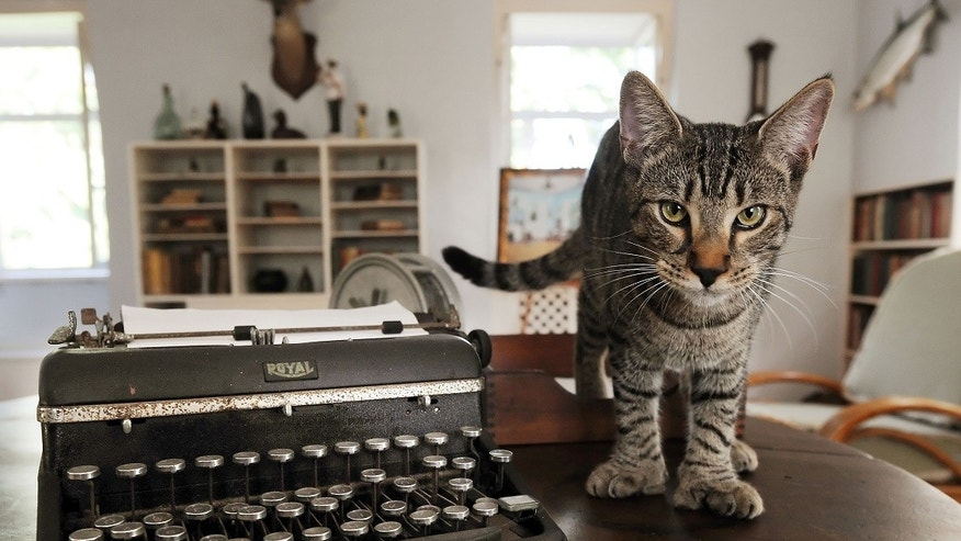 Hemingway's 6-toed cats survive Hurricane Irma assault on Key West