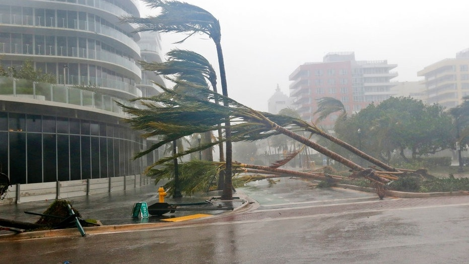 Palm trees lie strewn across the road in Miami Beach.