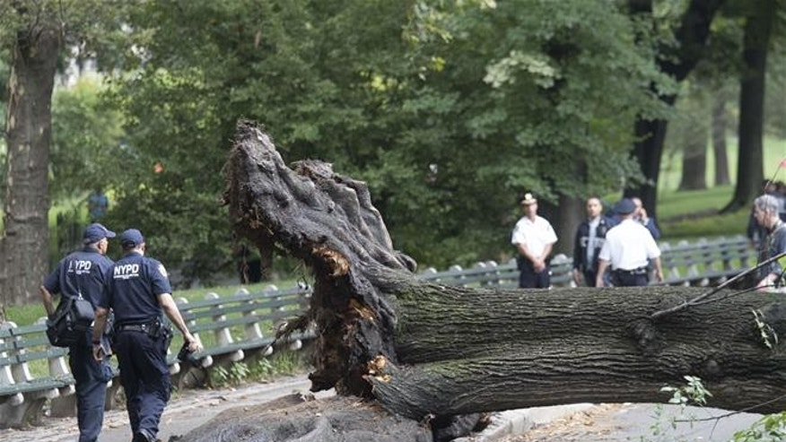 Mom hit by Central Park tree 'will never be 100% again'