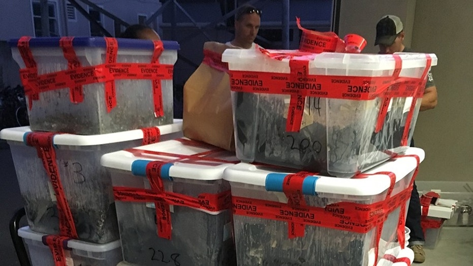 700-pound psychedelic 'shroom' stash found in Berkeley